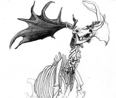 Dessin d'observation vue de trois quarts face d'un squelette de megaloceros par Charlotte Guichon