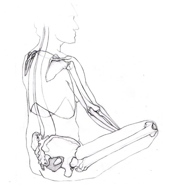 Dessin d'anatomie morphologie vue de dos trois quart par Charlotte Guichon