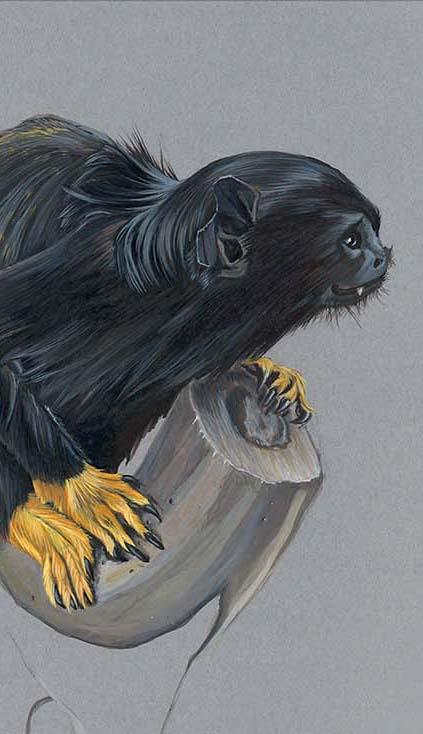 Etude à l'encre acrylique d'un tamarin à gants jaunes par Charlotte Guichon