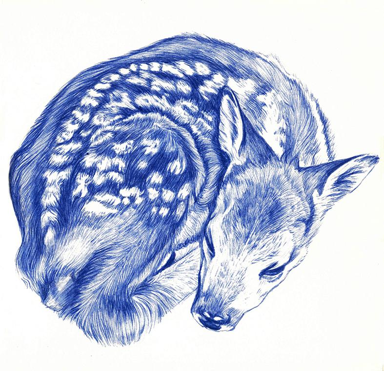 Dessin d'un faon au stylo bille bleu par Charlotte Guichon